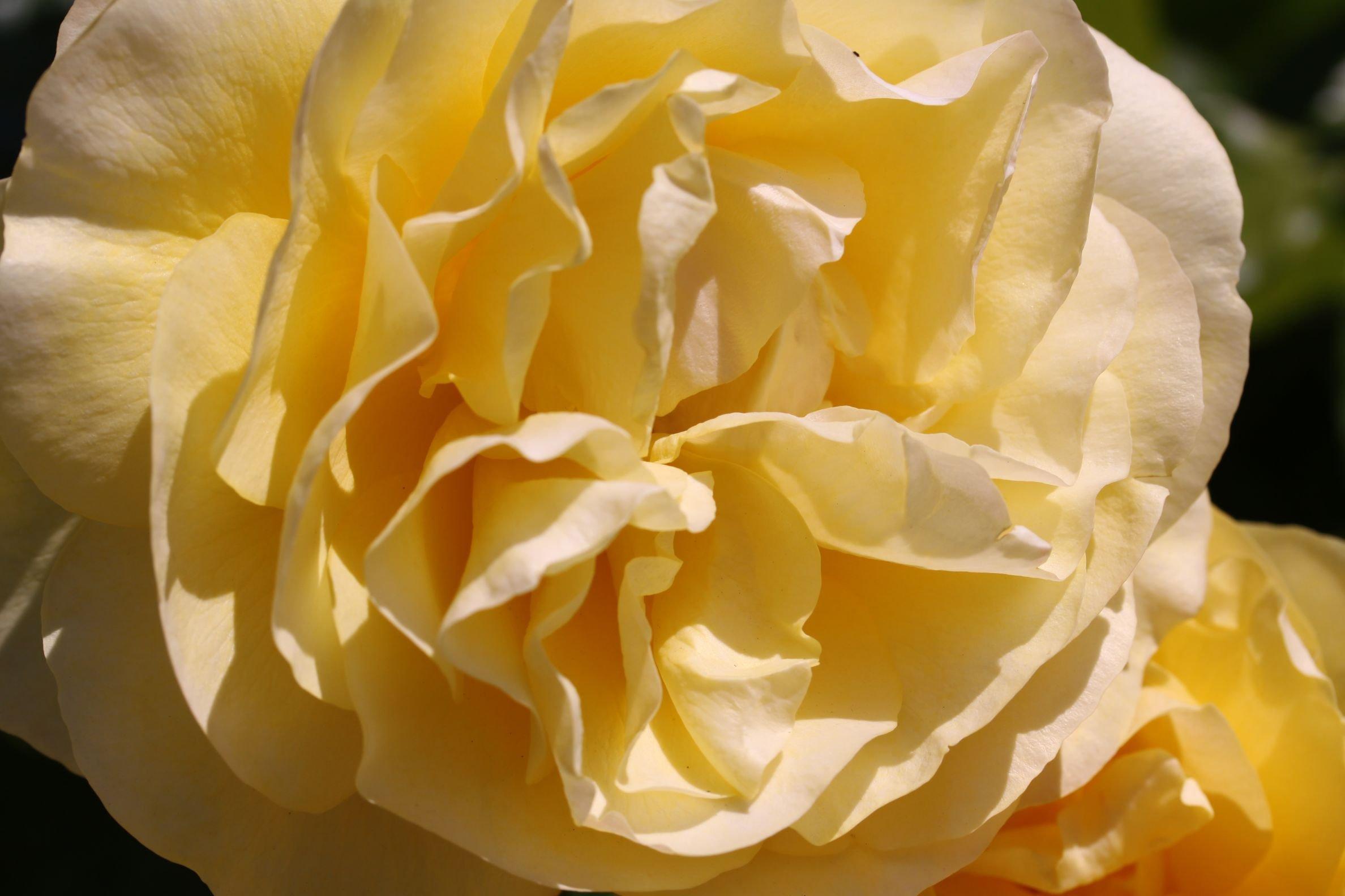 Rose_2019_12.jpg