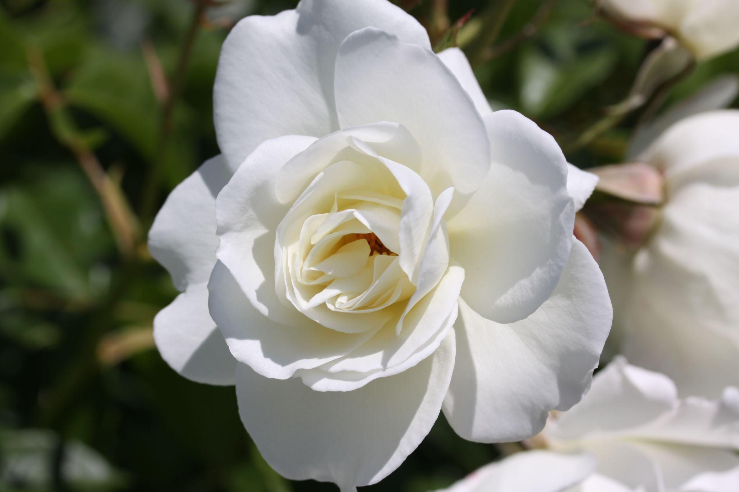 Rose_2019_14.jpg
