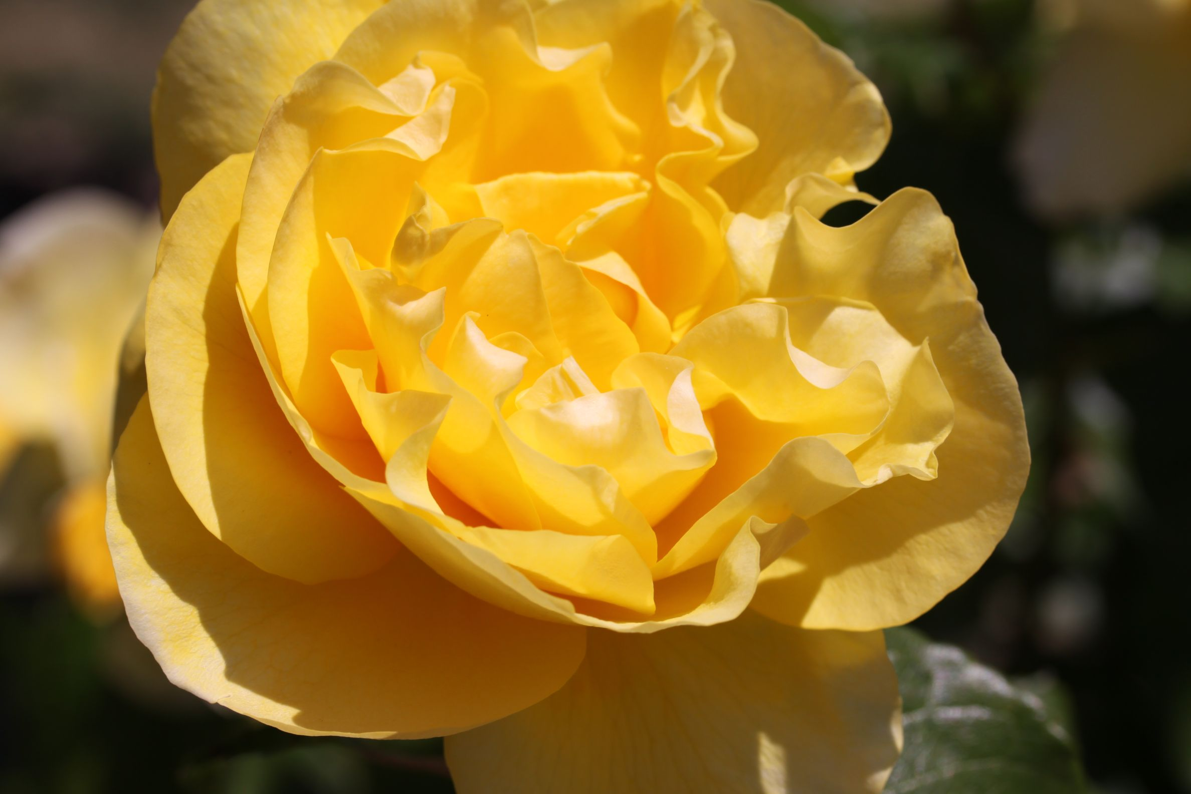 Rose_2019_6.jpg