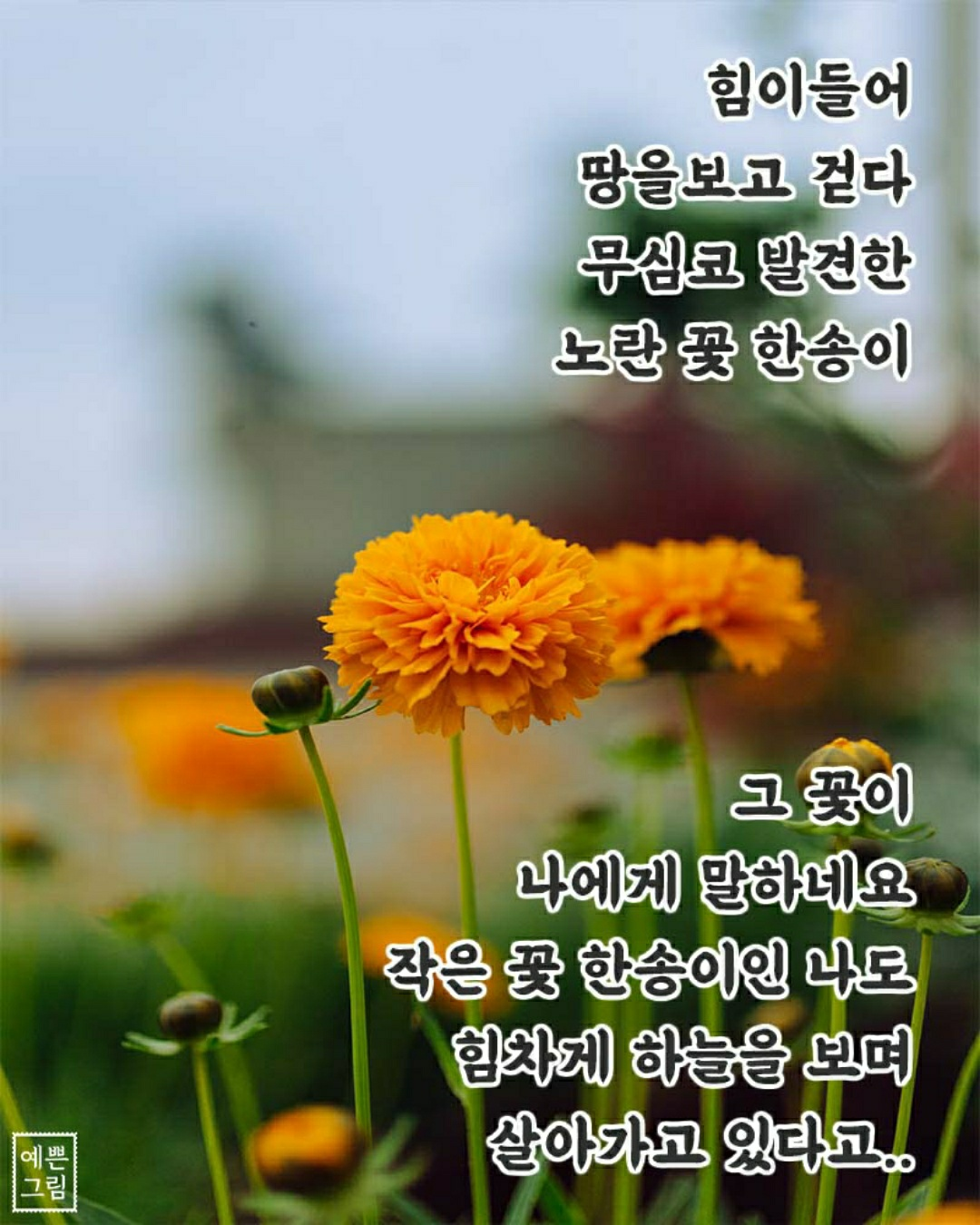KakaoTalk_20200913_080214544.jpg