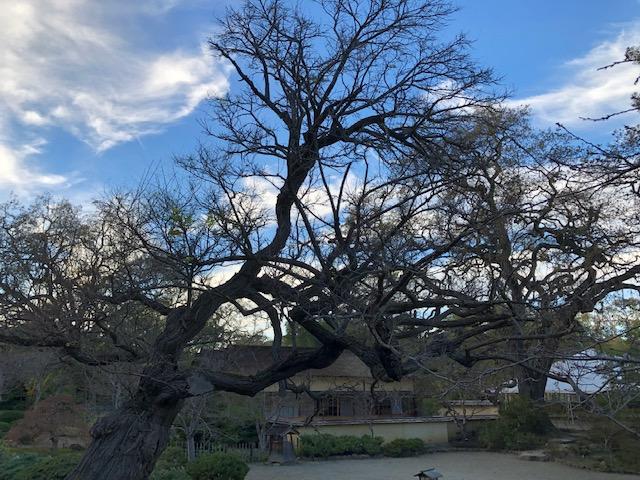 Hakone Gardens_2018_11.jpg