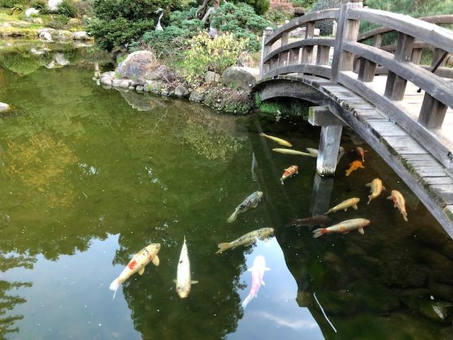Hakone Gardens_2018_6.jpg