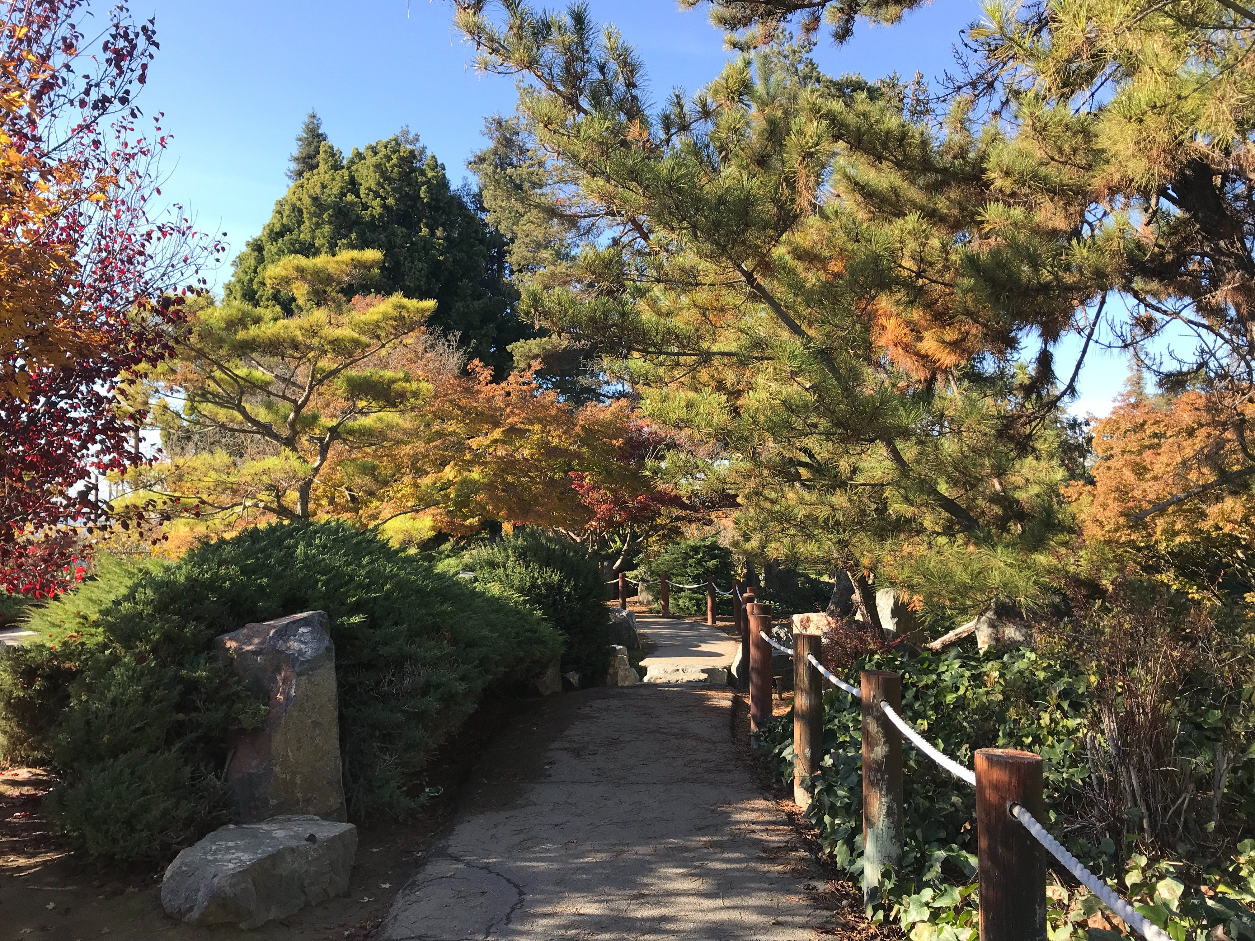 JapanesGarden_2018_29.jpg